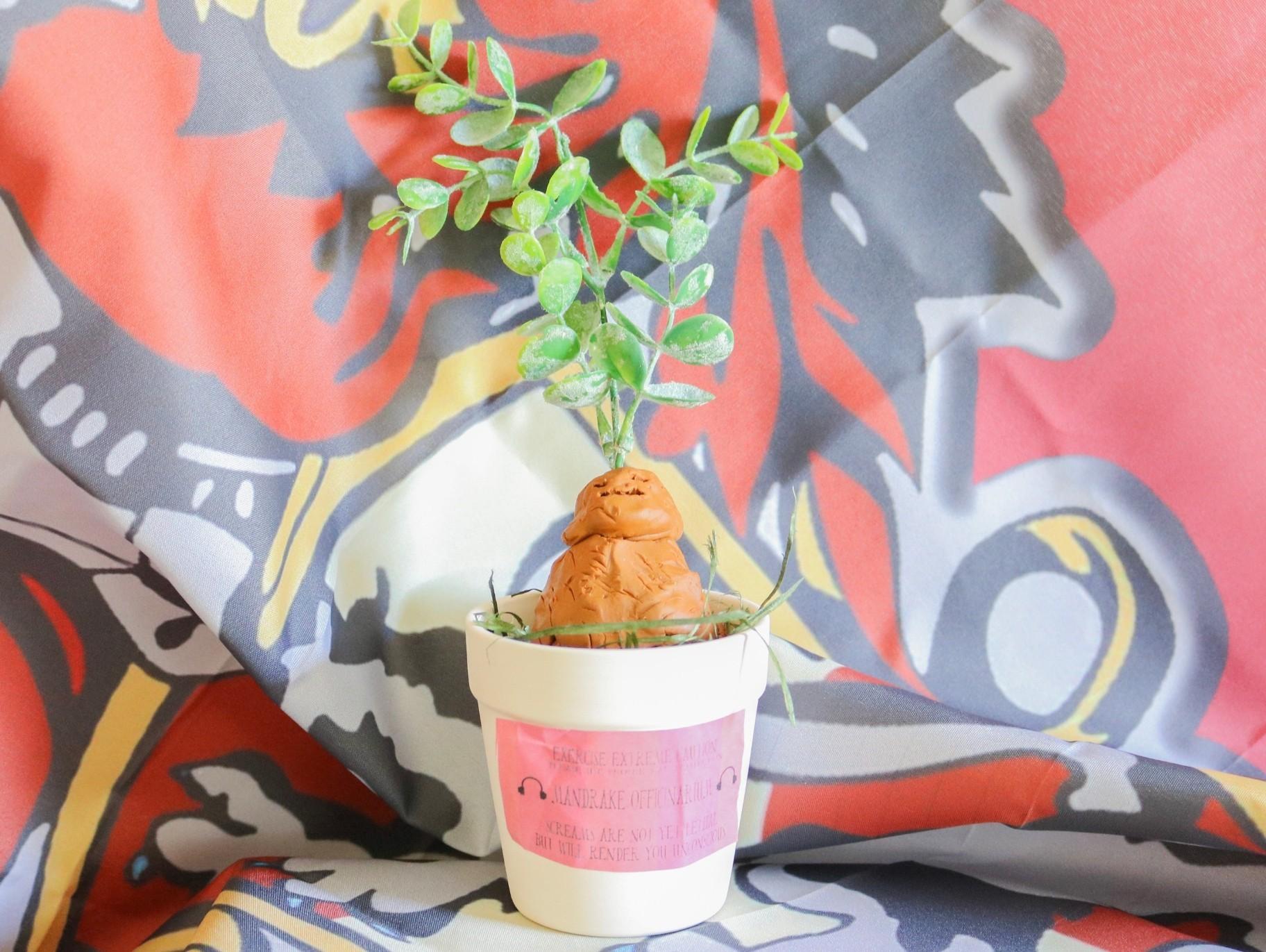 Diy Mandrake Potting Craft Fun365