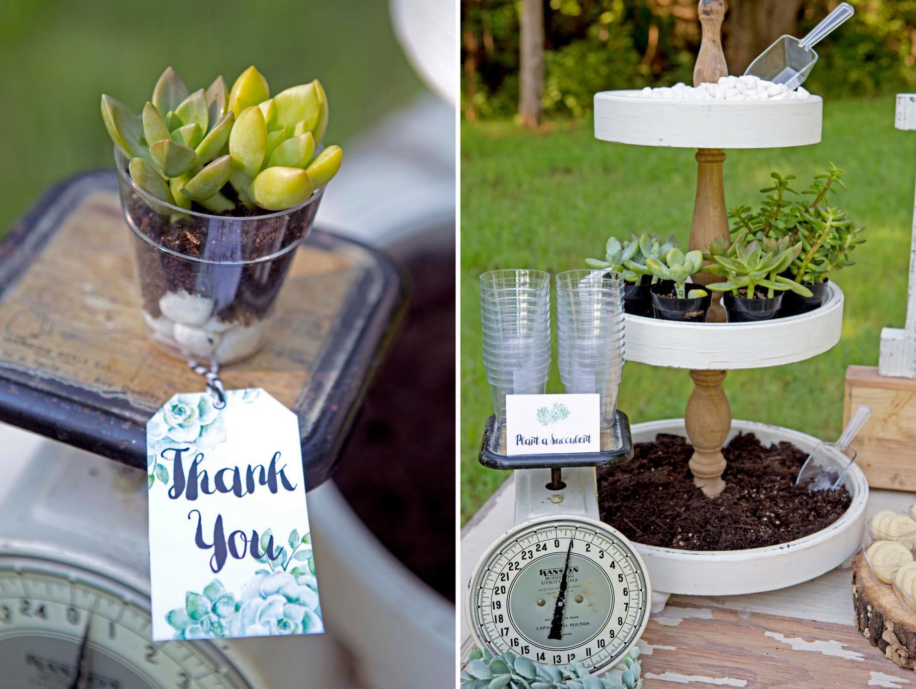 Diy Succulent Wedding Favors Fun365