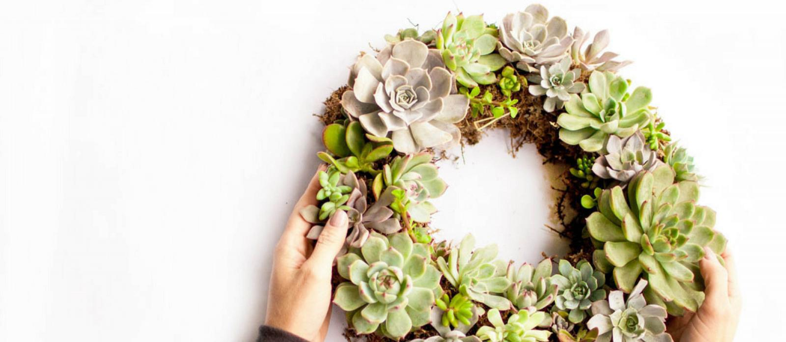 Make A Beautiful Living Succulent Wreath Fun365